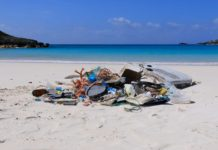 Plast på Bermuda (foto: Lisbeth Engbo)