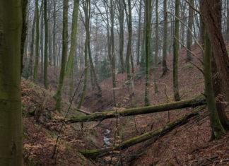 Den Danske Naturfond: Kollund Skov