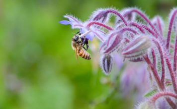 Biodiversitet (foto: Jeanette Frank Nielsen)