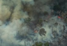 Amazonas brænder
