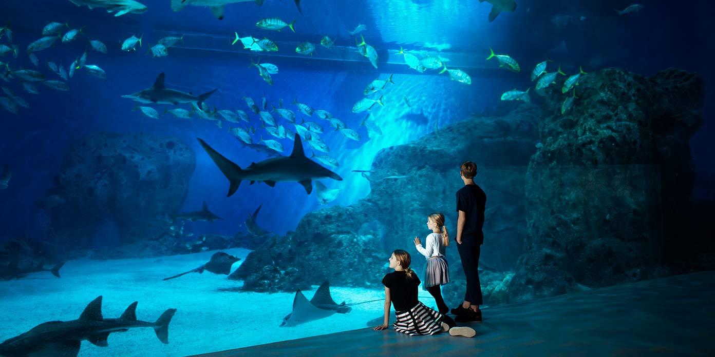 Børn foran Oceantank (foto: Jens Bangsbo/Den Blå Planet)